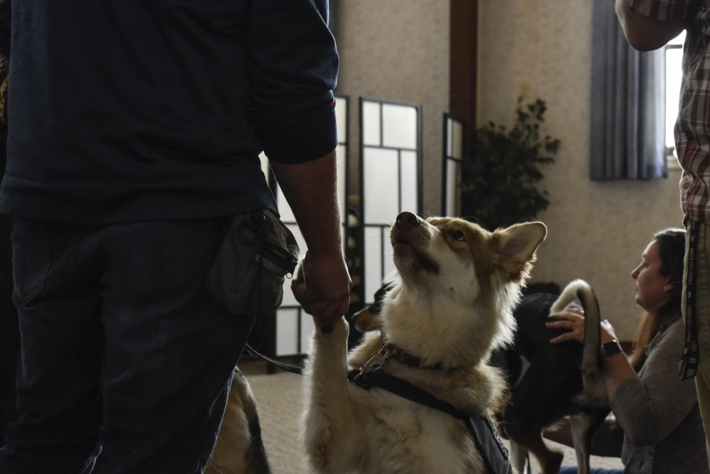 Service dogs give veterans a new leash on life