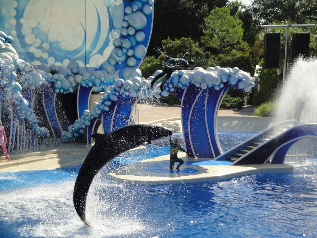 SeaWorld, Busch Gardens offer free admission for military veterans