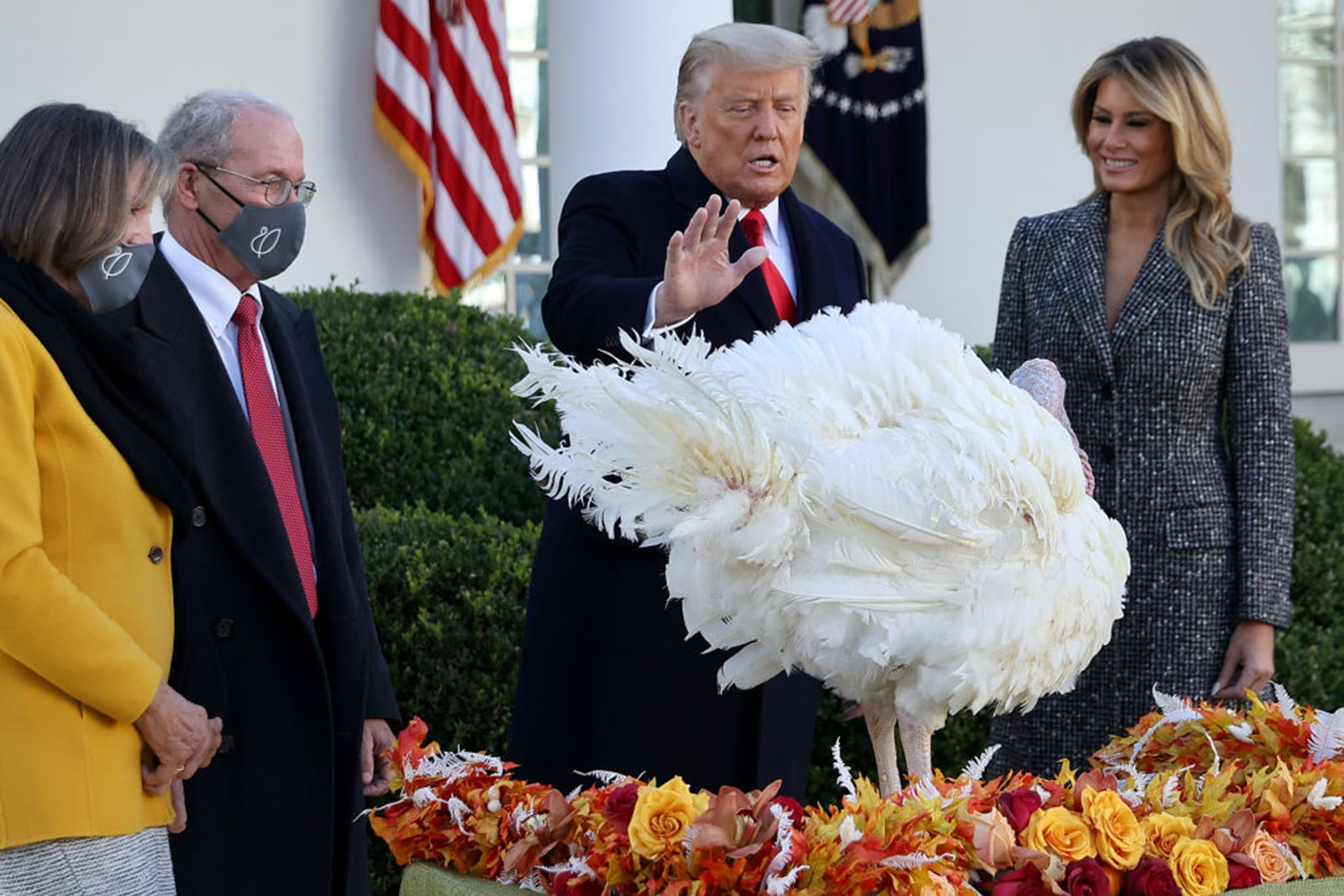 'That is a lucky bird': Trump pardons Corn, the Thanksgiving turkey