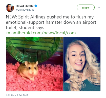 Woman Claims She Flushed Hamster on Spirit Air's Advice