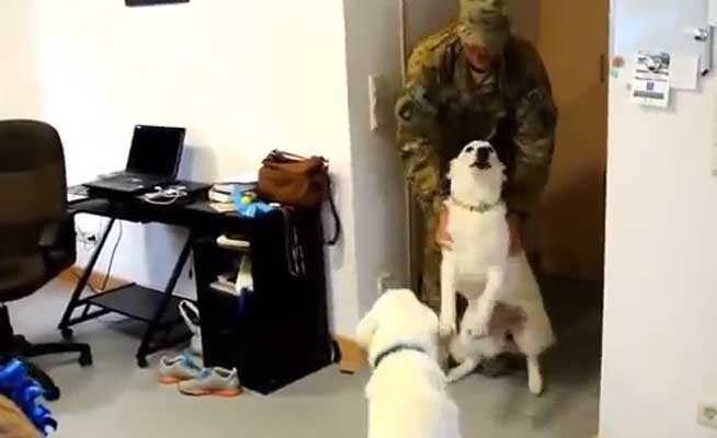 VIDEO: Dogs Welcoming Home Their Soldiers Featured