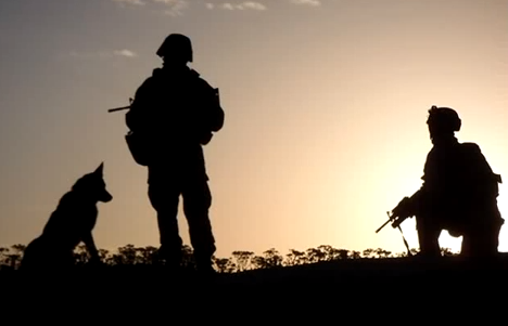 Video: American's Heroic Military Dogs Featured