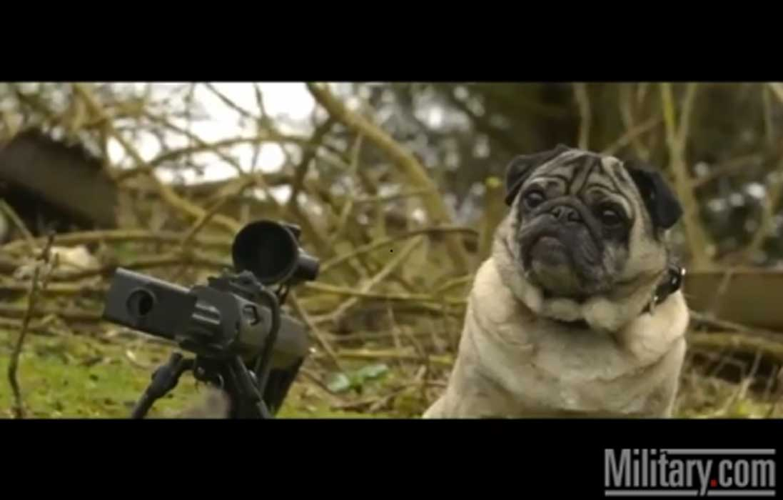 Sgt. Pugsley, The Military Sniper, Is The Funniest Video You'll See This Week Featured