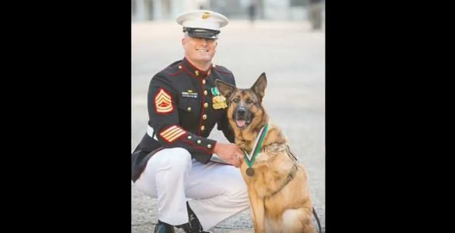 Meet Lucca, The Marine Service Dog That Lost Her Leg In Afghanistan & Just Awarded A Major Honor Featured