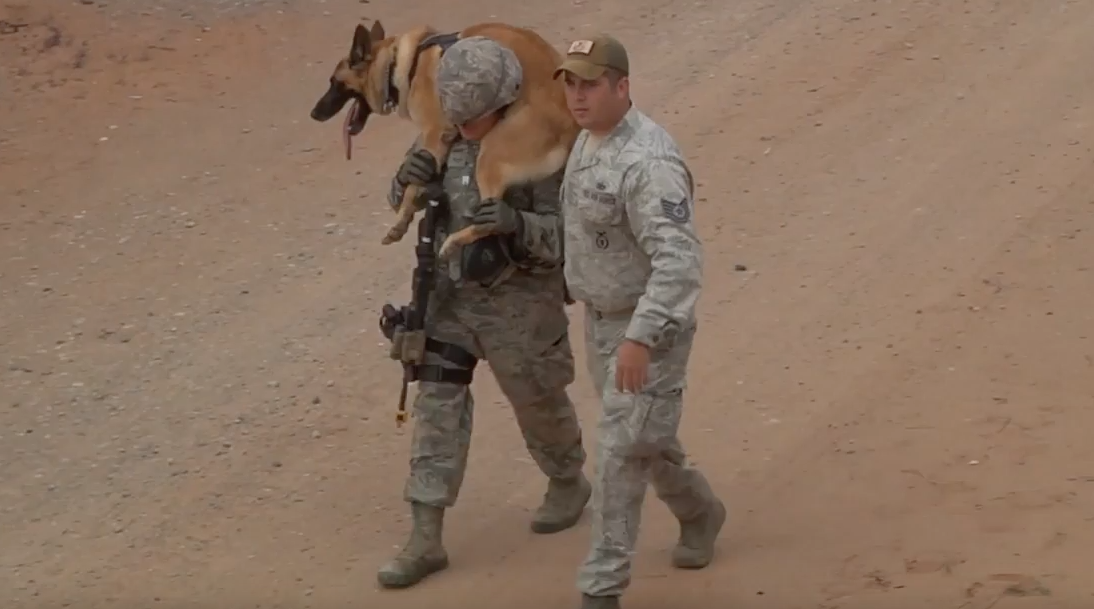 Watch Soldiers Learn How to Work With Dogs In Combat Situations Featured