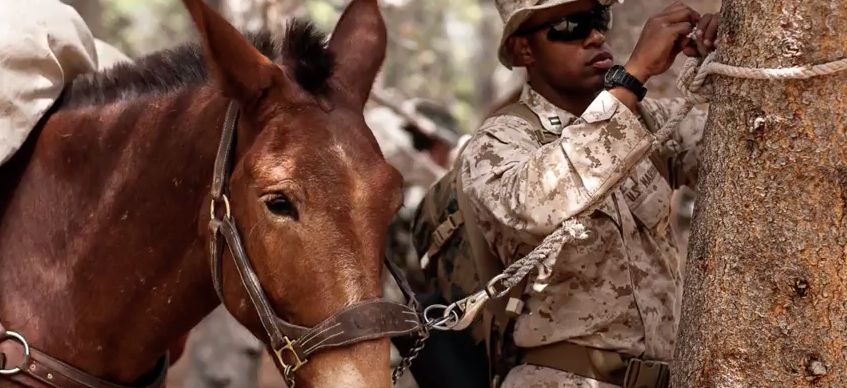 Screen Shot 2017 04 29 at 2.48.04 PM - (VIDEO) Learn All About The Marine Corps Mule Packing Course
