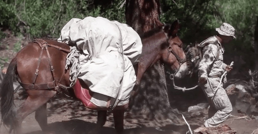 (VIDEO) Learn All About The Marine Corps Mule Packing Course Featured