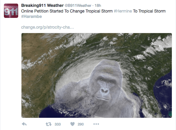 Screen Shot 2017 06 02 at 11.23.40 AM - Here Is How The Internet Remembered Harambe The Gorilla One Year After His Death