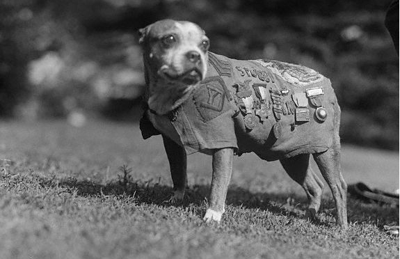World War I Hero Dog Sergeant Stubby To Star In Animated Film Featured
