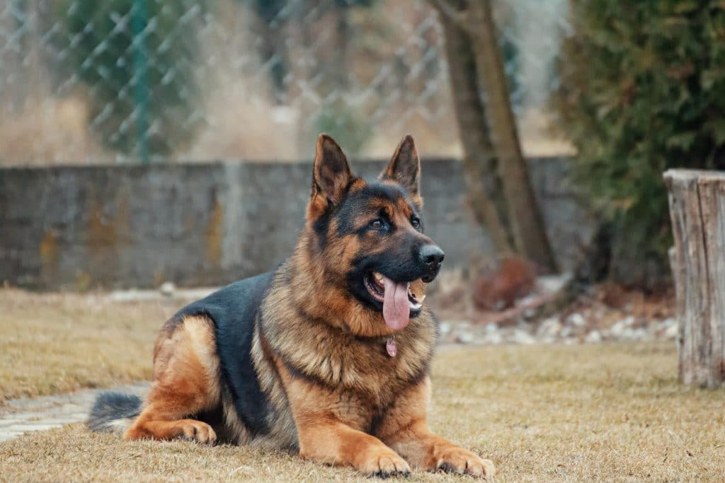 You can adopt a retired US Air Force military working dog