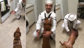This Dog Doesn't Know Her Homecoming Sailor - And Then She DOES!