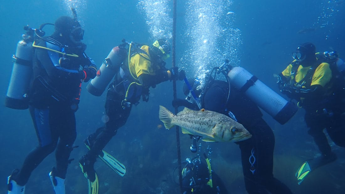 Healing through scuba diving? Yes, say local volunteers who teach diving to disabled vets