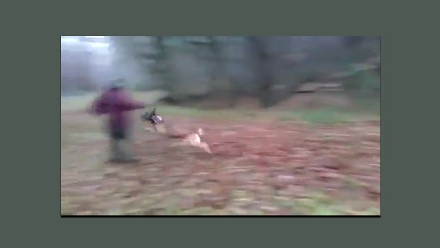 (VIDEO) Dog executes PERFECT tackle of man! Awesome! Featured