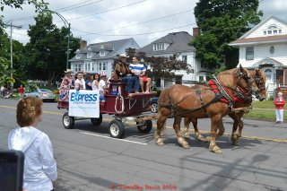 Privatization saved the 4th of July horses
